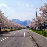 万騎の原-ふれあい学園前-桜