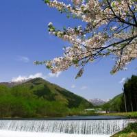 東法田-最上白川-桜