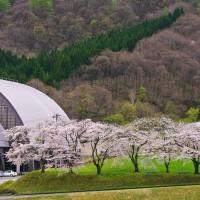 西公園-桜-2